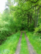 promenade nature foret