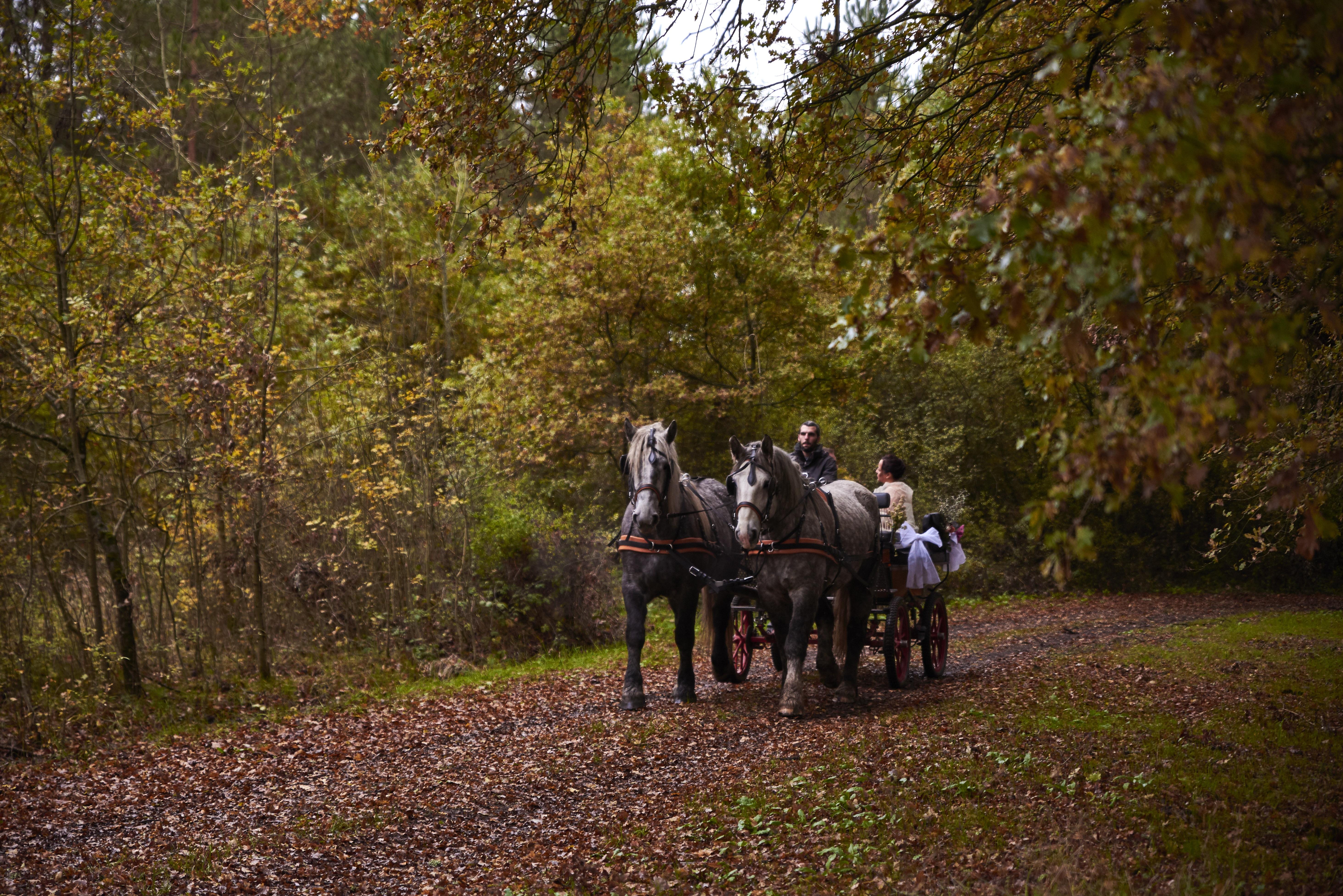 mariage calèche cheval