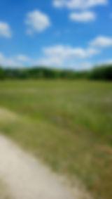 nature champs blé
