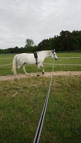 cheval blanc longe nature