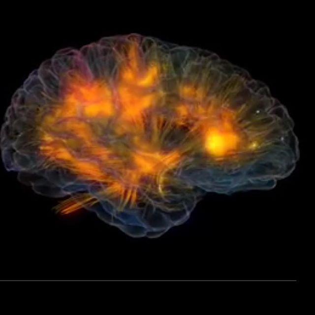 O funcionamento do cérebro é simplesmente fantástico..