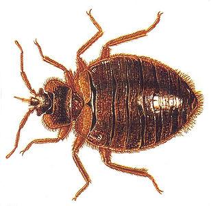 Sentury Pest Solutions
