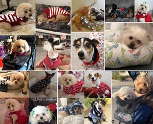 Pet recue recipients of Annie's belongings