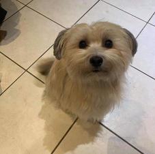 Pink puppy - stella at 2 years