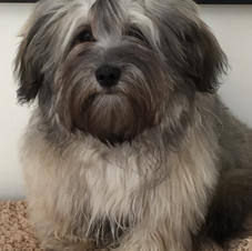 Grey - Gus  2 years