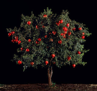Tal Shochat, Rimon (Pomegranate), 2011. Museum no. E.1127-2012. © Tal Shochat