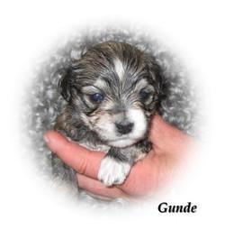 gunde3v