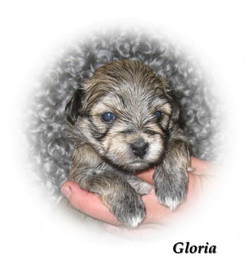 gloria3v