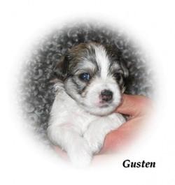 gusten3v