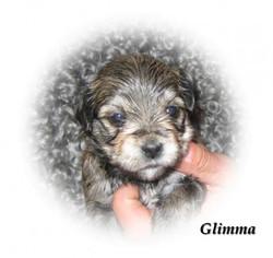 glimma3v