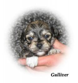 gulliver3v