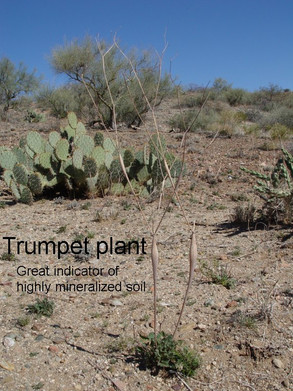 trumpet plant gold prospecting arizona mining claims placer