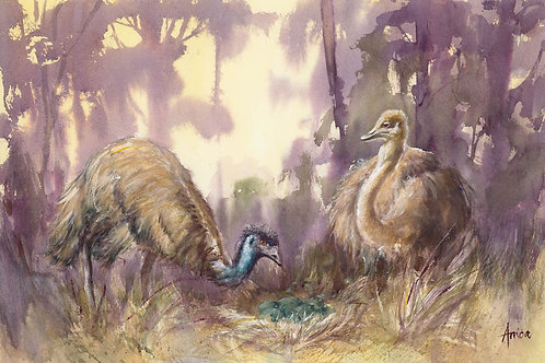Emus Ready for Another Brood