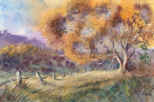 Bathurst Countryside