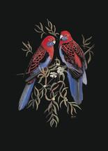 Crimson-Rosellas