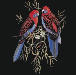 Crimson-Rosellas.jpg