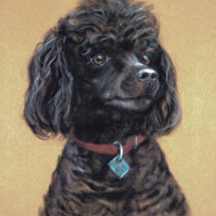 Mini - Our Poodle