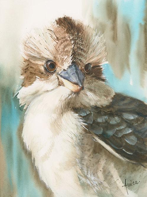 Kookaburra's Portrait