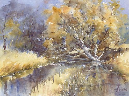 Jacqua Creek