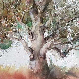 Magical Gum tree
