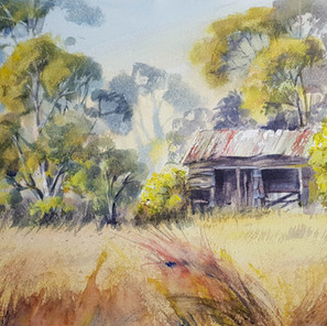 Old-Shed-and-WInter-Wattle