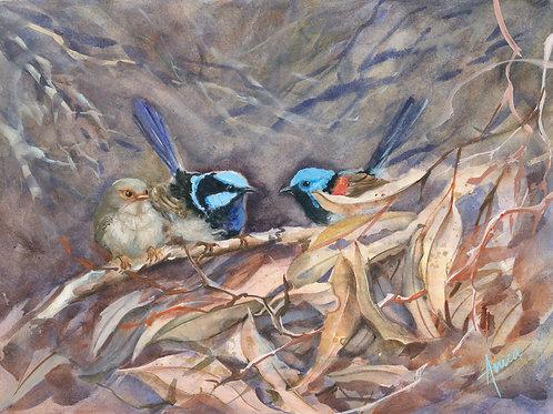 Wrens in the Bush