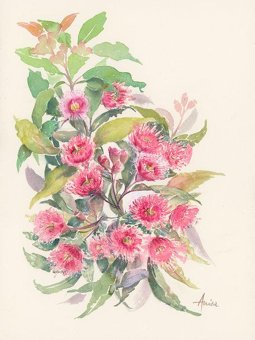 Gum Blossoms