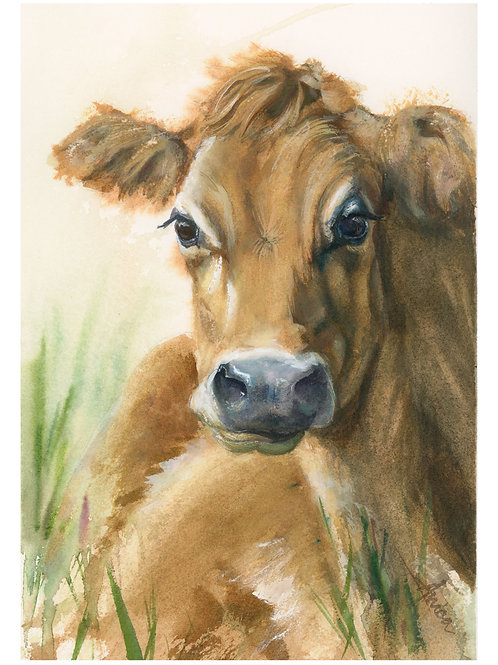Jess the Jersey Cow