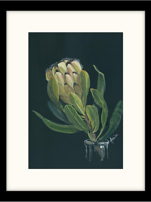 Fresh Mink Protea
