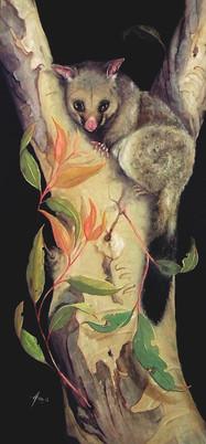 Brushtail Possum in Scribbly Gum