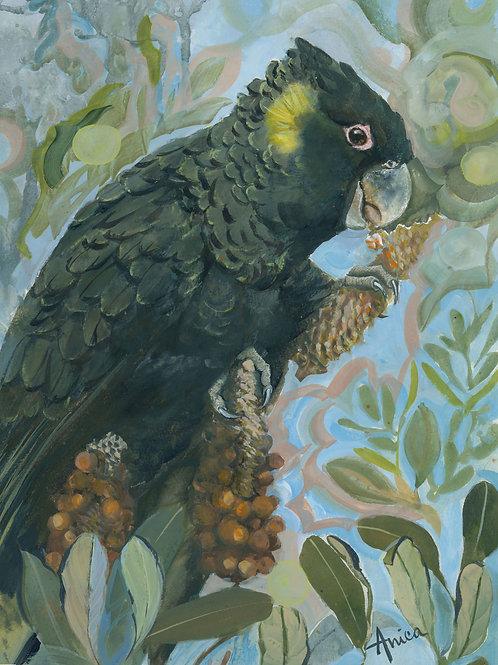 Black Cockatoo in Banksia