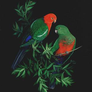 King parrots.jpg