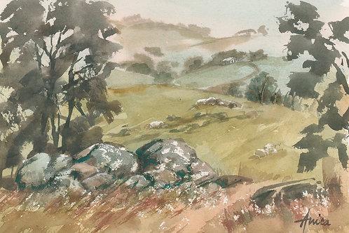 Rolling Hills of Harden Murrumburrah