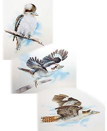 3 Kookaburras for Liz.jpg