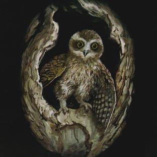 Boobook Owl..jpg