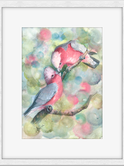 Nursery Time Mother and Baby Galahs (Framed)