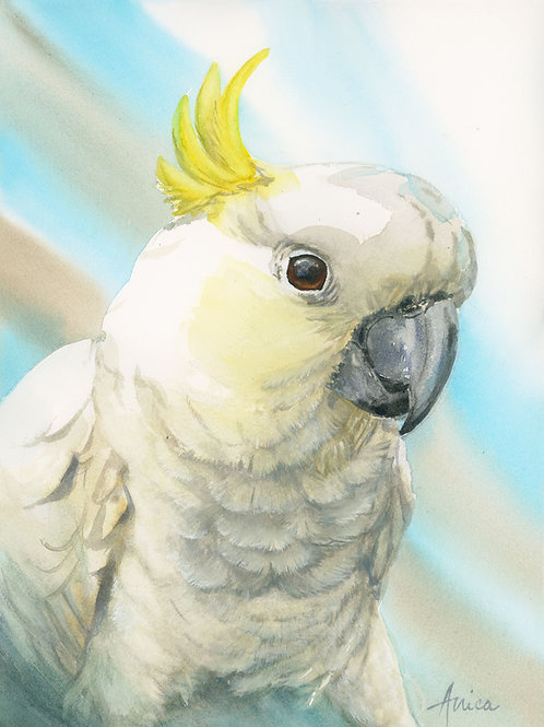 Putting My Best Foot Forward - Sulphur Crested Cockatoo