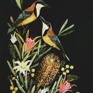 Eastern Spinebills in Wildflowers.jpg
