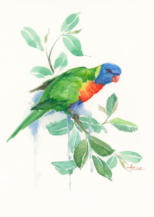 how to draw a rainbow lorikeet