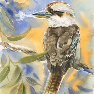 Kookaburra - A friend for the Kingfisher