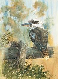 Kookaburra on the fence