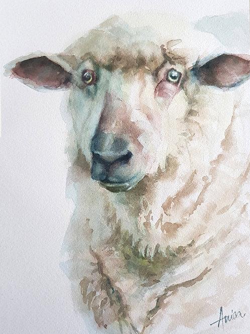 Harold the Sheep