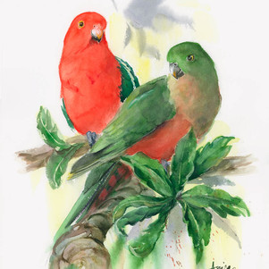 The King and His Queen - King Parrots