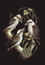 Laughing-Kookaburras---Trio