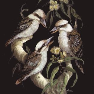 Laughing-Kookaburras---Trio.jpg