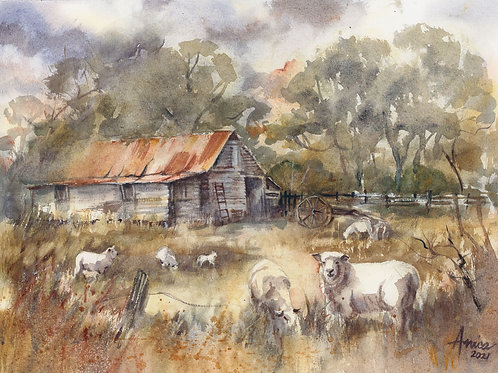 High Country Pastures