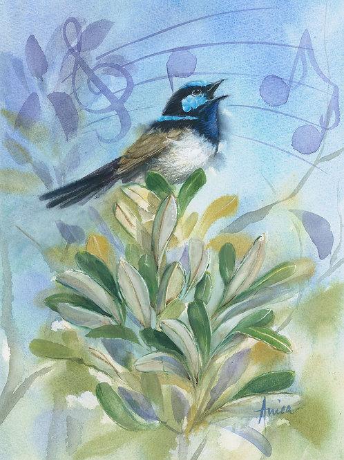 Singing Wren Upon the Banksia