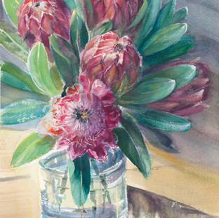 Winter Proteas