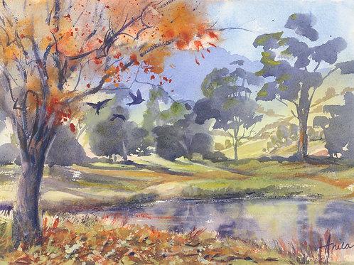 Autumn Splendour in Kangaroo Valley