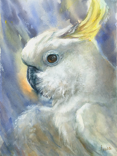 Tales of a Sulphur Crested Cockatoo
